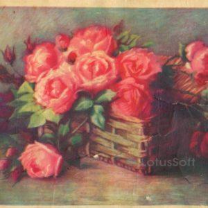 Roses, 1961