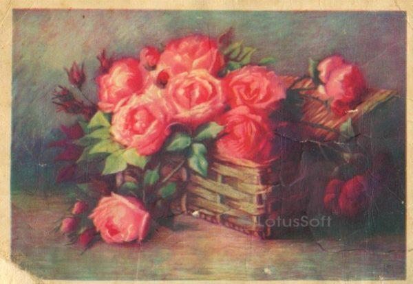 Розы, 1961 год