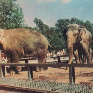 Asian Elephants, 1968