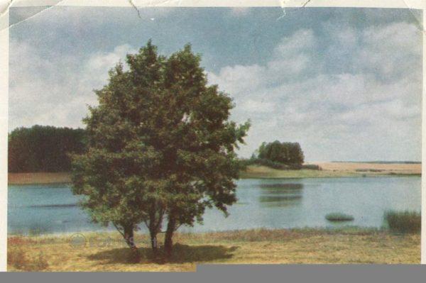 Михайловское. Озеро Маленец, 1964 год