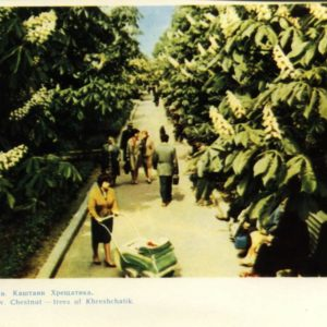Chestnuts Downtown. Kiev, 1964