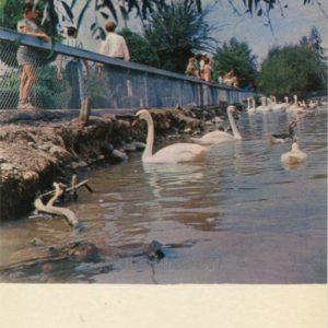 Swans on the Exhibition of Economic Achievements of the Kirghiz SSR. Frunze (1974)