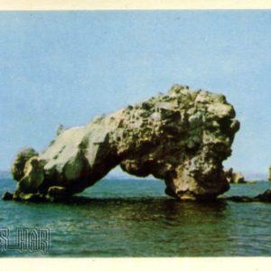 Marine chimeras, 1964