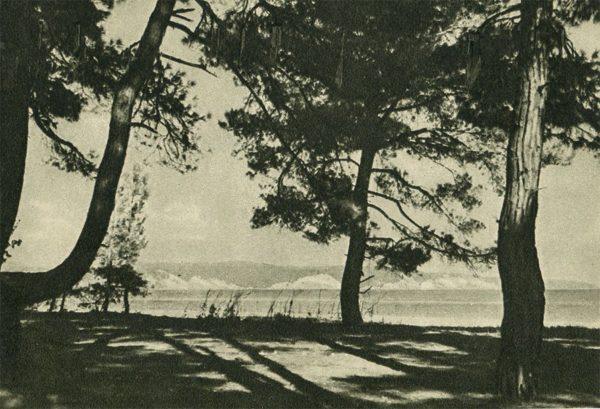 Пицунда. Берег моря, 1955 год