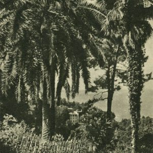 Батуми. Ботанический сад, 1955 год