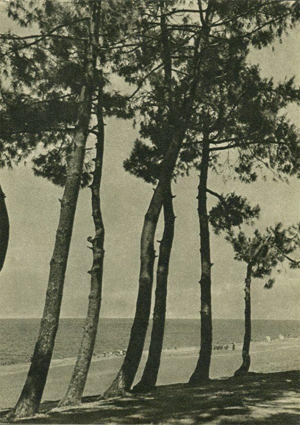 Кобулети. Берег моря, 1955 год