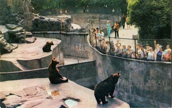 Калинград. В зоопарке, 1975 год