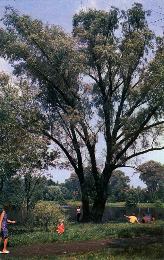 Калинград. Ботанический сад, 1975 год