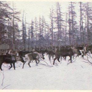 Magadan region, 1986