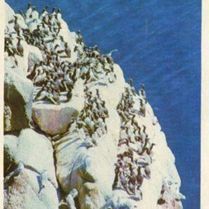 Bird colony on the island of Arius Stone, 1975