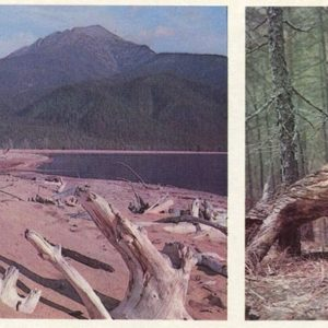 """Whimsical Trees"" - such a lot on Baikal, 1978"