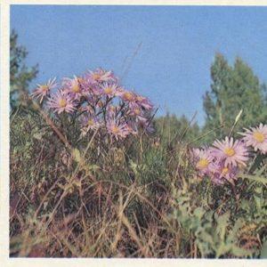 Flowers of Lake Baikal, 1978