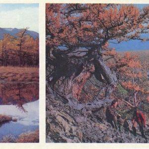 Nature Trail, 1978