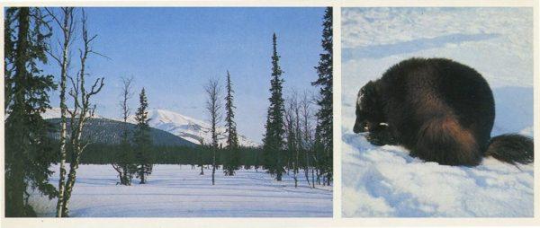 Зима. Печоро-Илычский заповедник, 1982 год