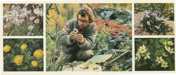 Цветы Печоро-Илычского заповедника, 1982 год