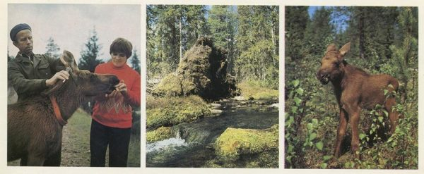 Опытная лосеферма, 1982 год