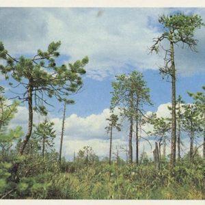 Upper marsh, 1982