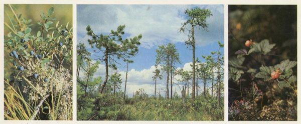 Верхнее болото, 1982 год