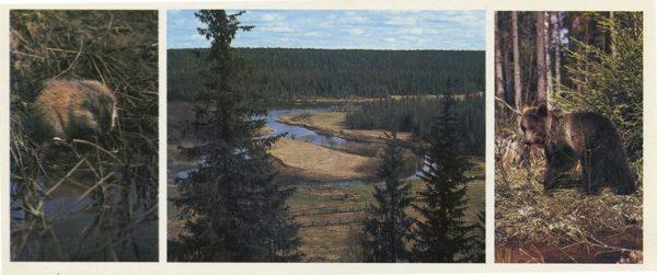 Taiga river, 1982