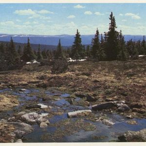 Spring. Pechora-Ilych Nature Reserve, 1982
