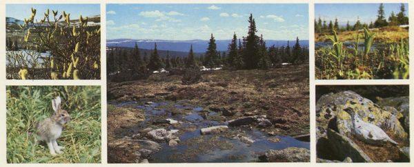 Весна. Печоро-Илычский заповедник, 1982 год
