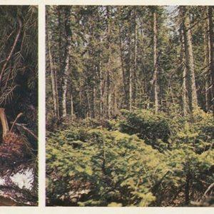 Kidus. Pechora-Ilych Nature Reserve, 1982