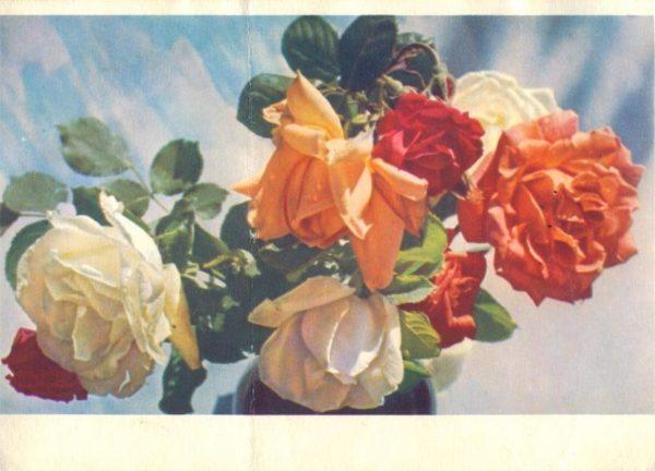 Коллекции цветов, 1967 год