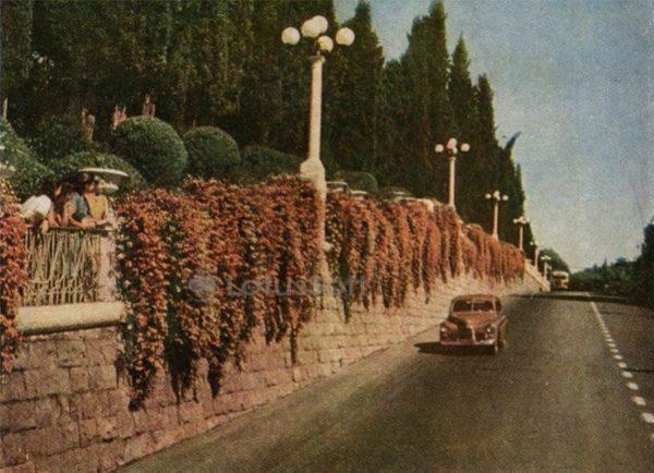 Курортный проспект. Сочи, 1958 год