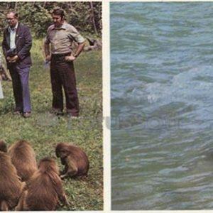 В обезьяньем питомнике. Сухуми, 1978 год