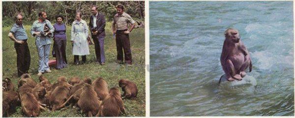 The monkey nursery. Sukhumi, 1978