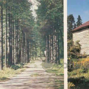 Аллея лиственниц на хуторе Горка. Дача архимандрита, 1986 год
