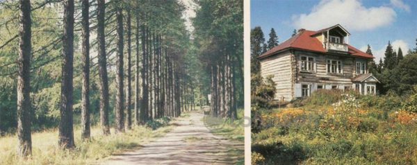 Alley larches on a Farm Hill. Cottage Archimandrite, 1986