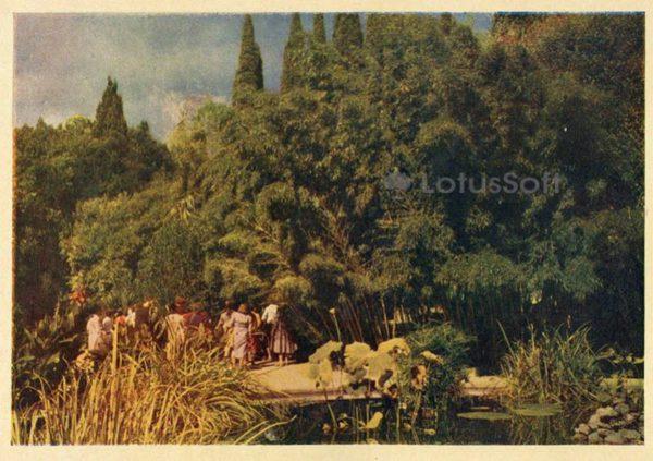 Никитский ботанический сад, бамбуковая роща. Крым, 1961 год