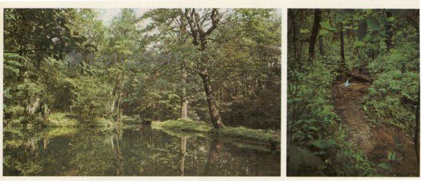 "The upper pond. Creek Gremikha. Museum-Estate NA Nekrasov ""Karabikha"", 1983"