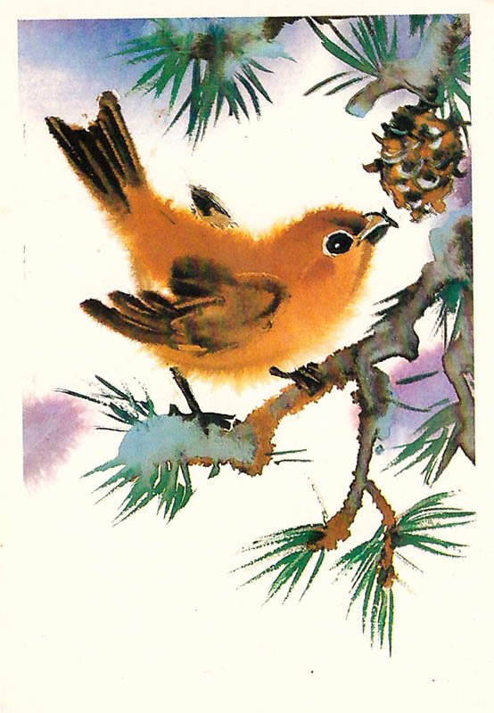 Postcard crossbill, 1985