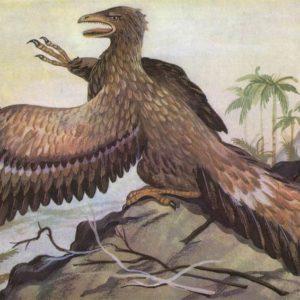 Archeopteryx, 1983