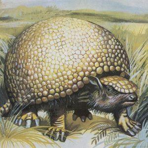 Glyptodon, 1983