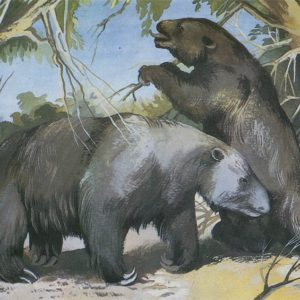 Megatherium, 1983