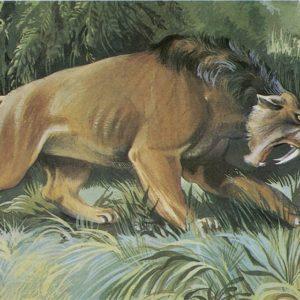 Саблезубый тигр, 1983 год