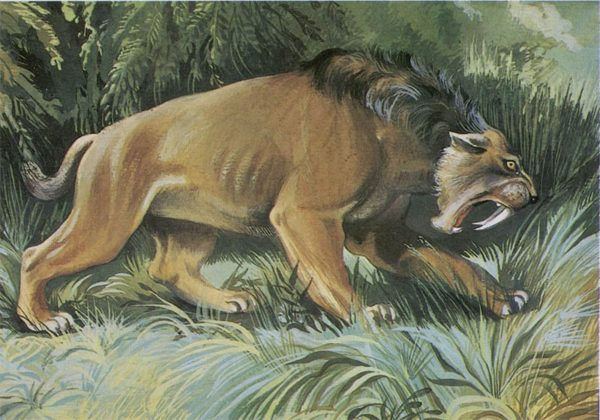 Toothed tiger, 1983