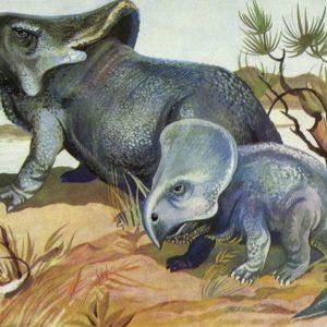 Protoceratops, 1983