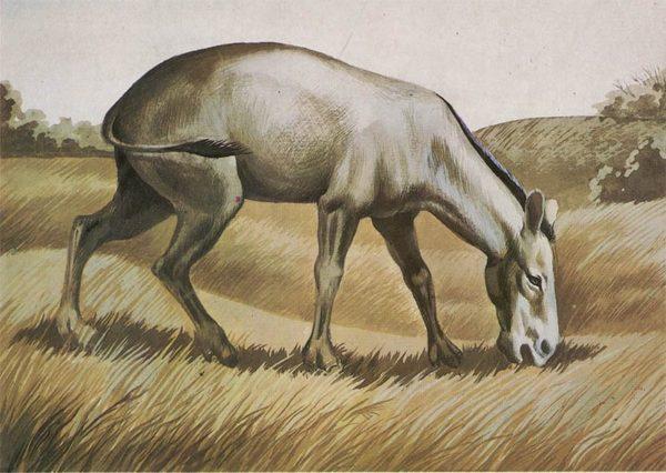 Hipparion, 1983