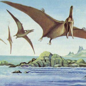 Птеранодон, 1983 год