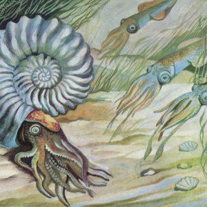 Ammonites and belemnites, 1983