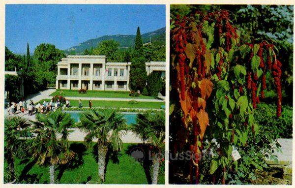 В партере сада. Вид на административный корпус. Никитский ботанический сад. Крым, 1980 год