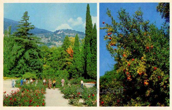 Rosary. The pomegranate tree. Nikita Botanical Garden. Crimea, 1980