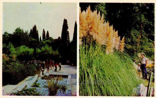 Водный каскад. Пампасная трава. Никитский ботанический сад. Крым, 1980 год