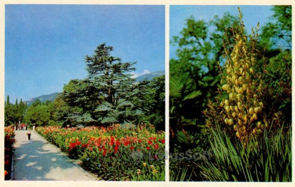 Вастаовнчый участок. Никитский ботанический сад. Крым, 1980 год