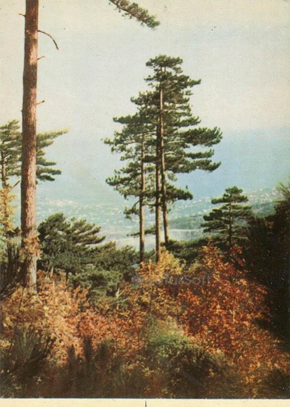 Крымский пейзаж. Крым, 1964 год