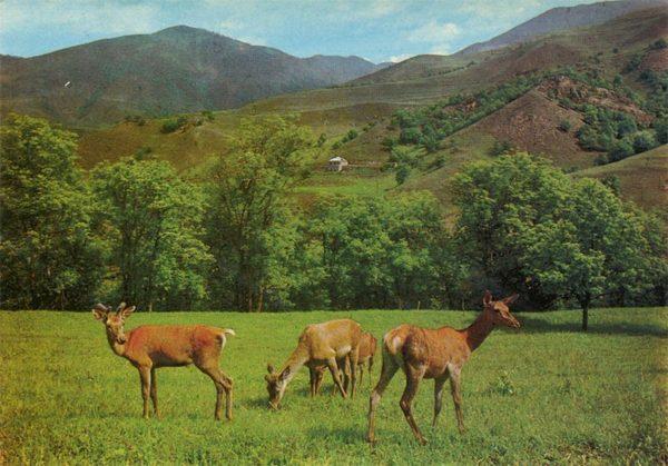 State Reserve. Dilijan. Armenia, 1979